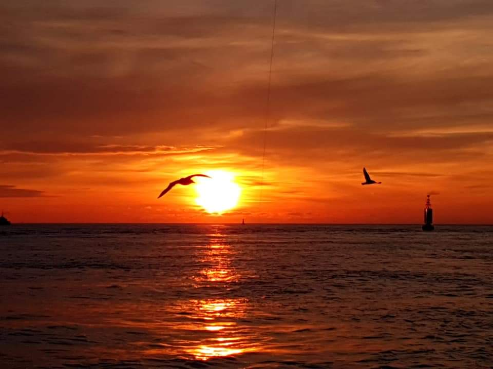 1_sunset-birds